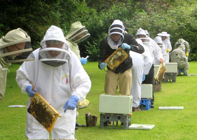 Gormanston beekeeping Summer School 2019