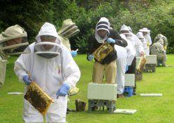 Beekeeping Summer School – Gormanston 2020