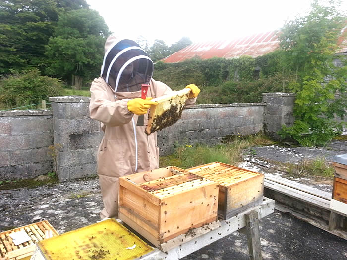 Beginners Beekeeping Class in Galway