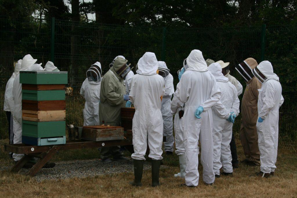 Beginners Beekeeping Course in Limerick